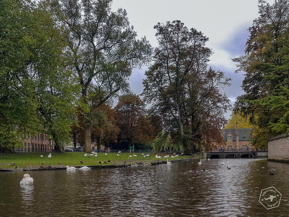 Brugia - Minnerwater park