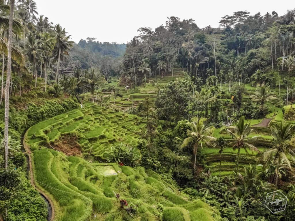 Bali - travelstory.pl - tarasy ryżowe
