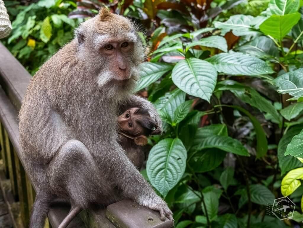 Ubud - Monkey Foerst _ Bali - Travelstory.pl