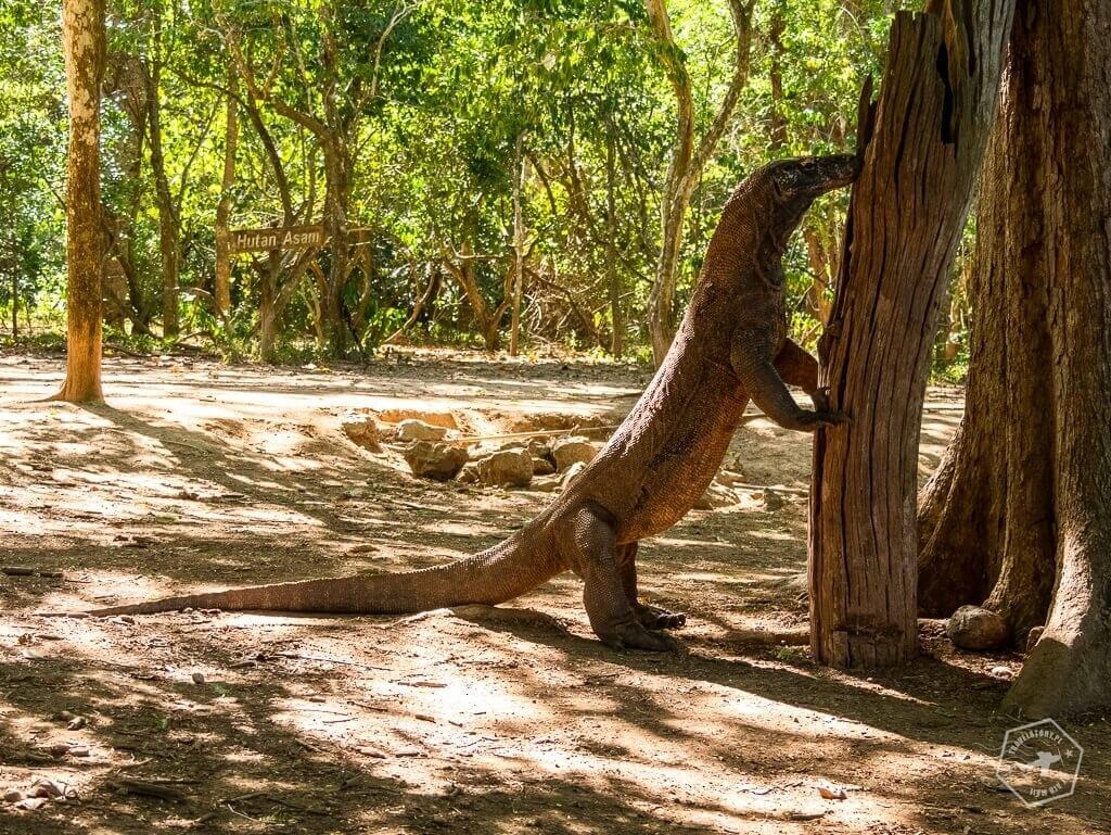 park narodowy Komodo - travelstory.pl
